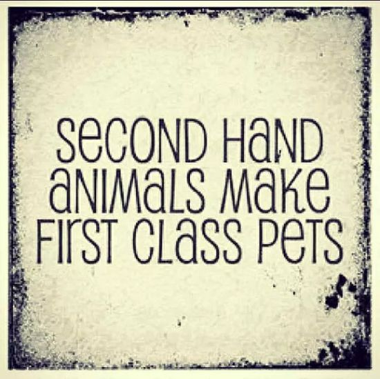 273 best Second hand animals make first class pets Please adopt - vet tech job description