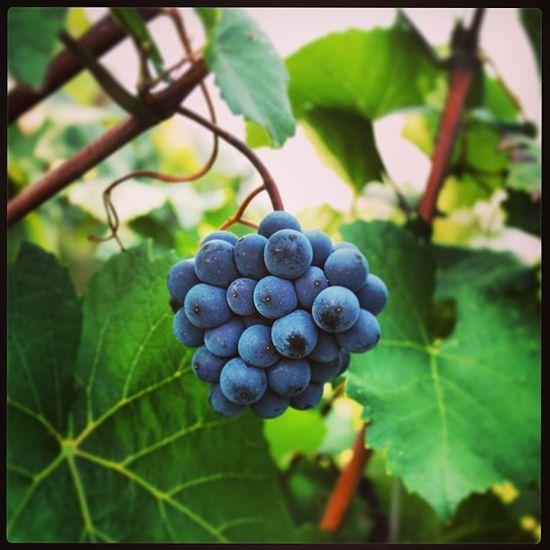 44 best Nature images on Pinterest Vine yard, Vineyard and - leinwandbilder für küche
