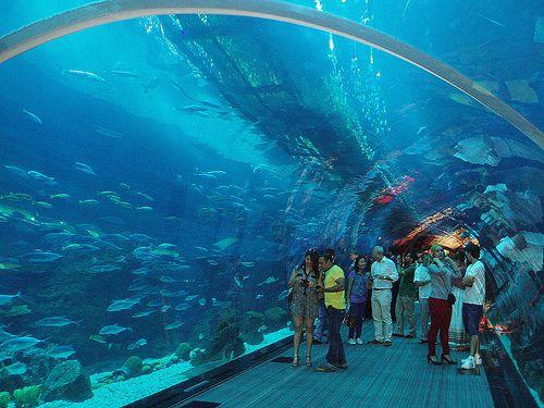37 best Shopping Malls images on Pinterest Dubai, Architecture - marine biologist job description
