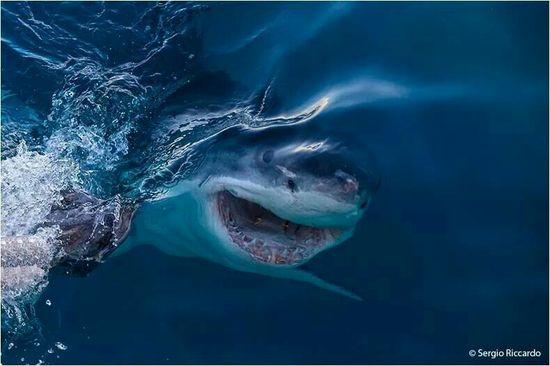 4591 best Tiburones y orcas images on Pinterest Sharks, Shark - marine biologist job description