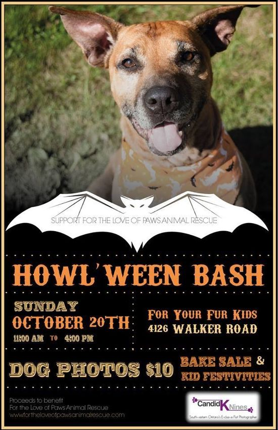 11 best Fundraising Events images on Pinterest Fundraising - lost dog flyer examples