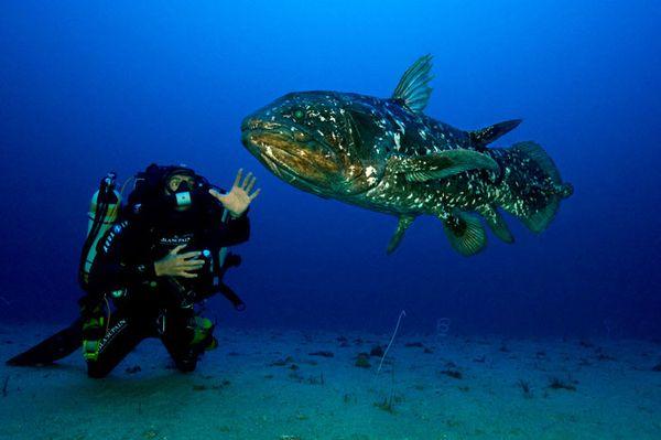 104 best Coelacanth-living fossil images on Pinterest Image - marine biologist job description