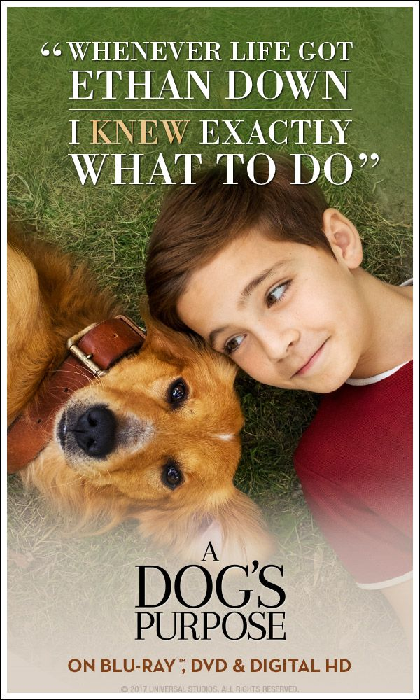 44 best A Dogs Purpose ❤ ❤ images on Pinterest Movies, A - pet poster