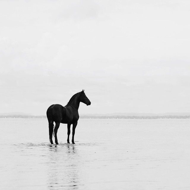 2781 best equine images on Pinterest Horses, Beautiful horses - equine release form