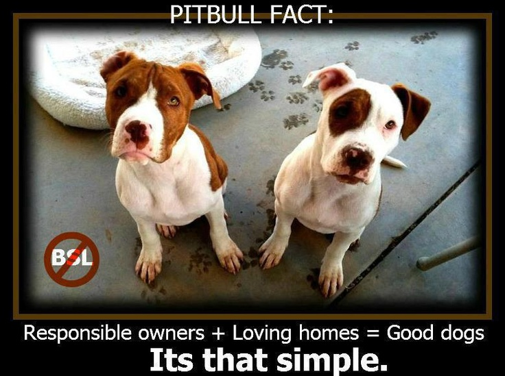 159 best Animal Rights and Wrongs images on Pinterest Animal - lost dog flyer examples