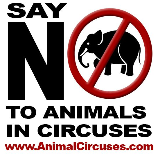 18 best Say NO to Animals in Circuses! images on Pinterest - how to research your cause for writing the petition