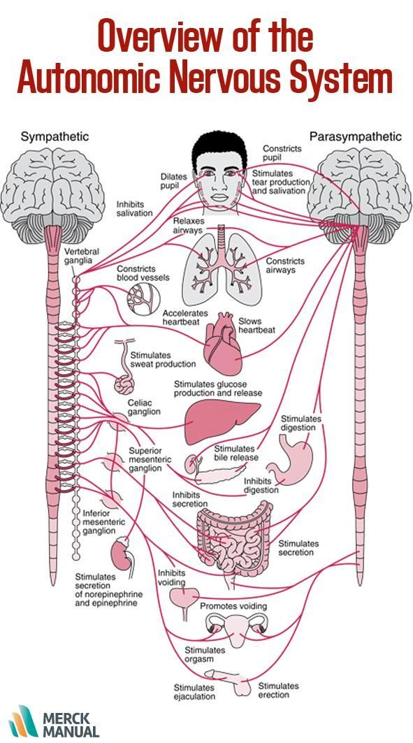 263 best Anatomy \ Physiology images on Pinterest Nursing - good general objective for resume