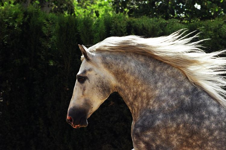 14245 best Horses images on Pinterest Horses, Beautiful horses - equine release form