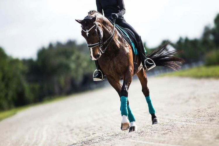 1936 best The Equestrian images on Pinterest Equine photography - equine release form