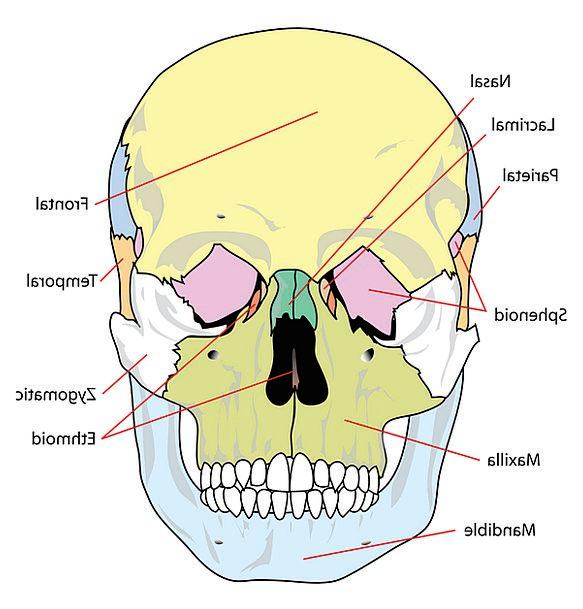 Skull, Mind, Medical, Drawing, Health, Labelled, Branded, Diagram