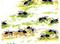 Wenn Ameisen lstig werden