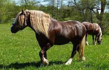 cai Padurea Neagra
