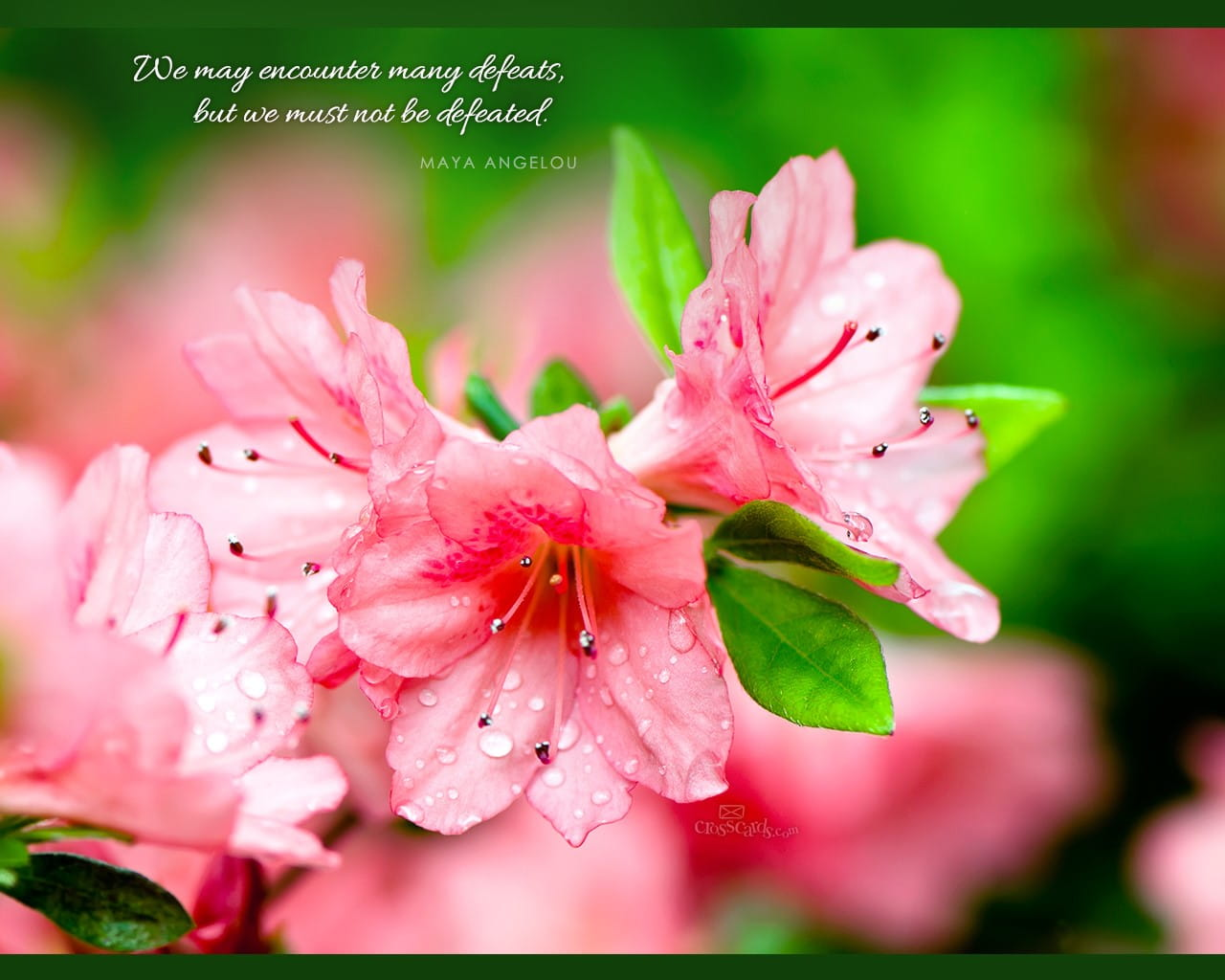 Cute Pretty Flower Calendar Wallpaper Maya Angelou Quote Desktop Wallpaper Free Backgrounds