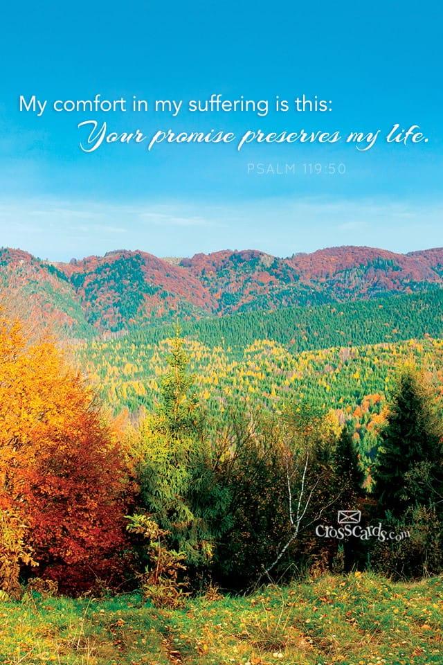 Fall Scripture Wallpaper Psalm 119 50 Bible Verses And Scripture Wallpaper For