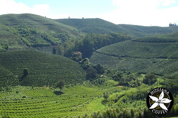 02-coffee-hills