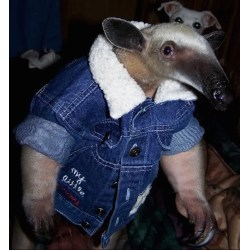 Small Crop Of Dog Wearing Pants
