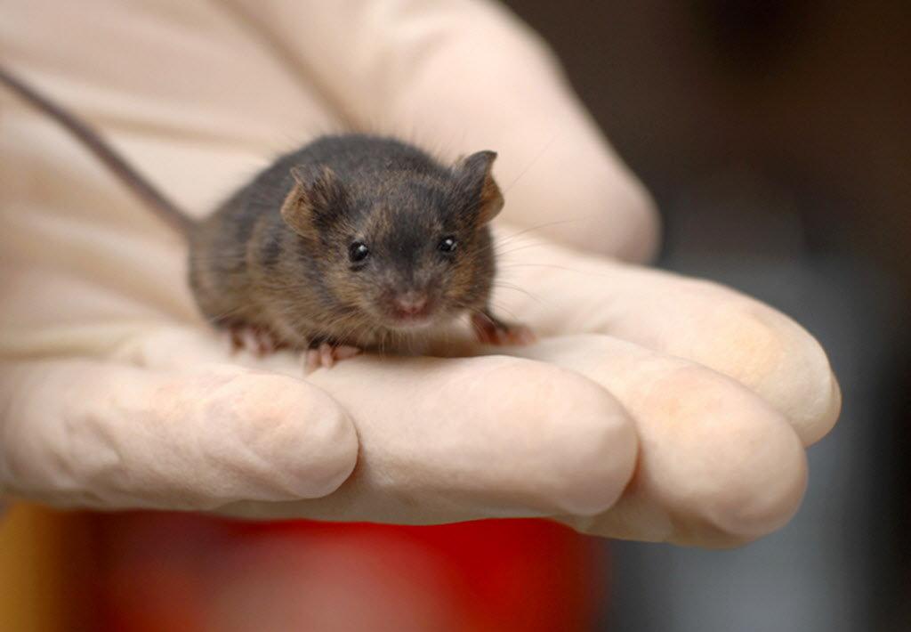 cute mice pictures - Josemulinohouse