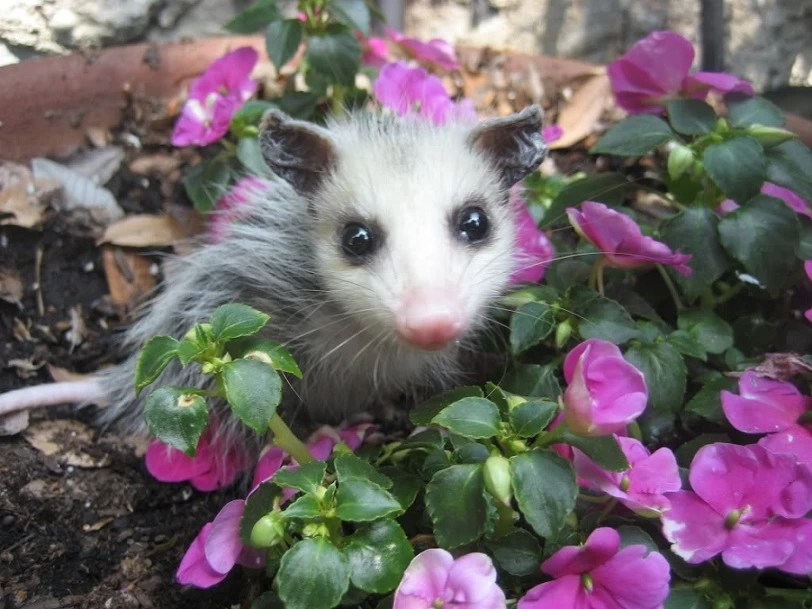 Cute Babies With Flowers Wallpaper Animals Waking Up For Spring Slice Ca
