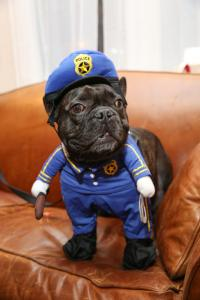 Collection of Police Dog Halloween Costume