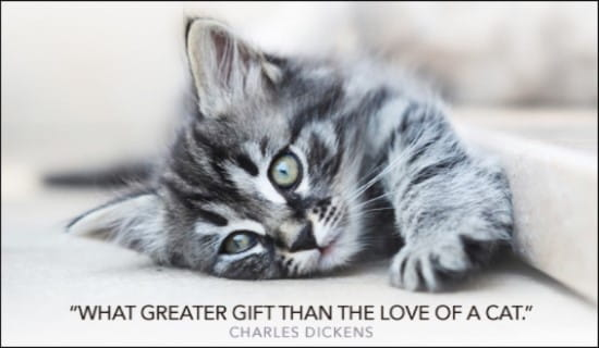 Sympathy Wallpaper Quotes Free Love Of A Cat Ecard Email Free Personalized Animals