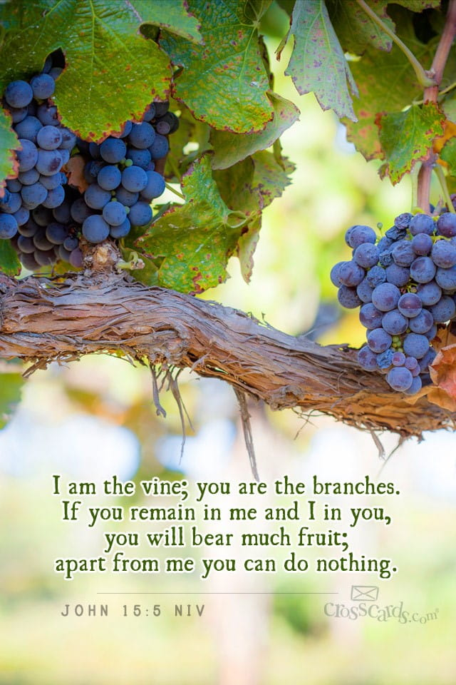 Iphone Wallpaper Bible Quotes May 2014 Vine And Branches Desktop Calendar Free May