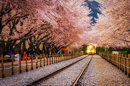 20 Mystical Tree Tunnels You Won\u0027t Believe Actually Exist - TechEBlog - cherry blossom animated