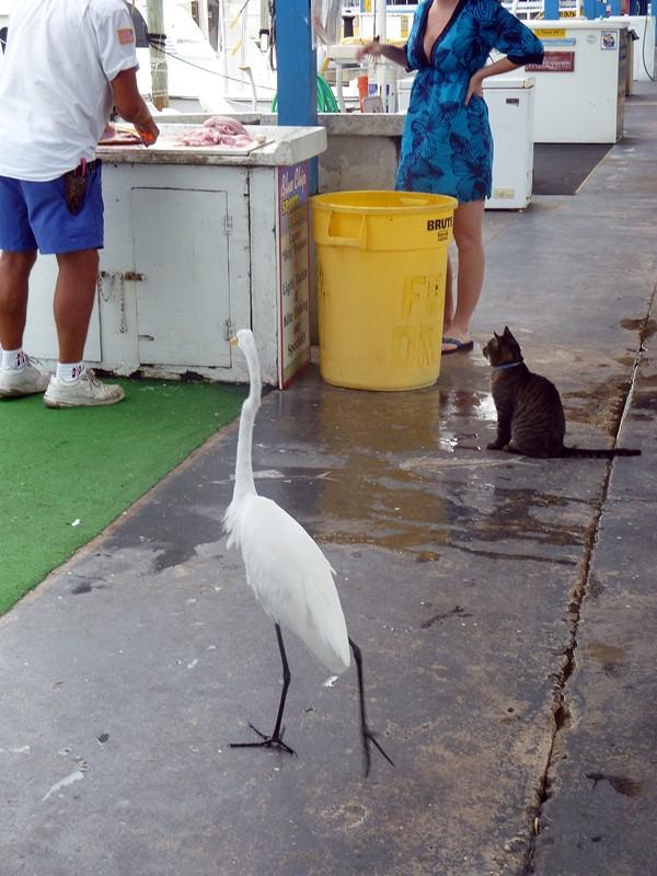 queue chez le poissonnier key largo