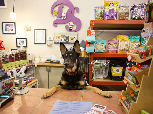 Pet stores in Chicago for dog leashes, cat collars and more