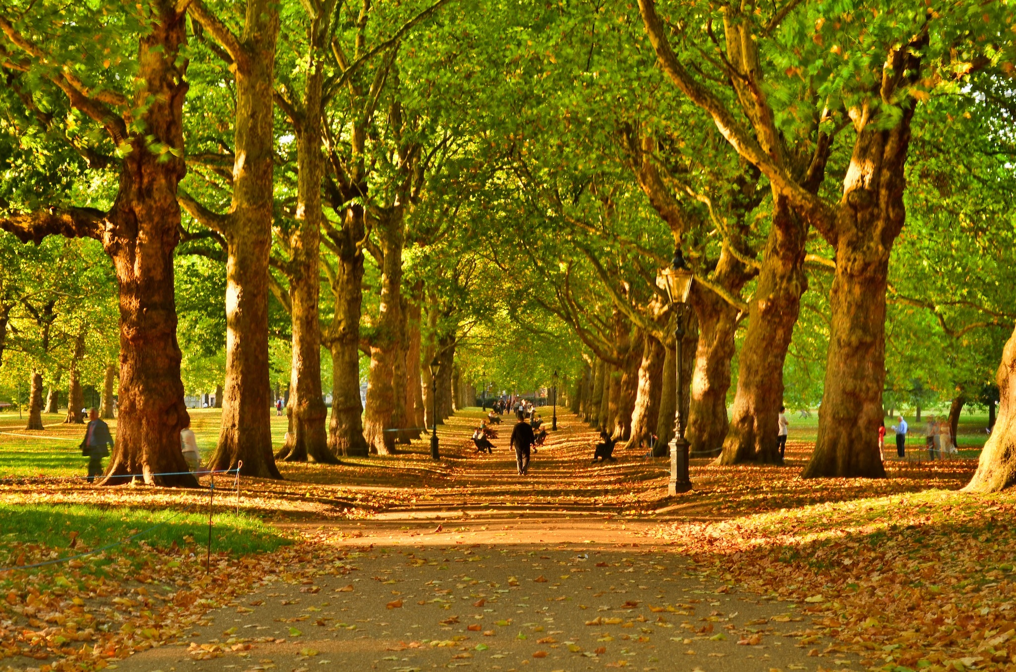 Fall Leaves Pathway Computer Wallpaper Seven Calming Ways To Really Slow Down In London Things