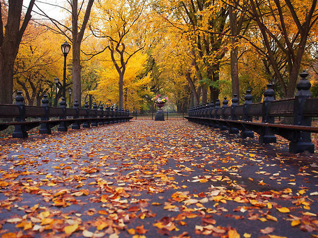 Fall Chevron Wallpaper 25 Beautiful Photos Of Fall In Nyc