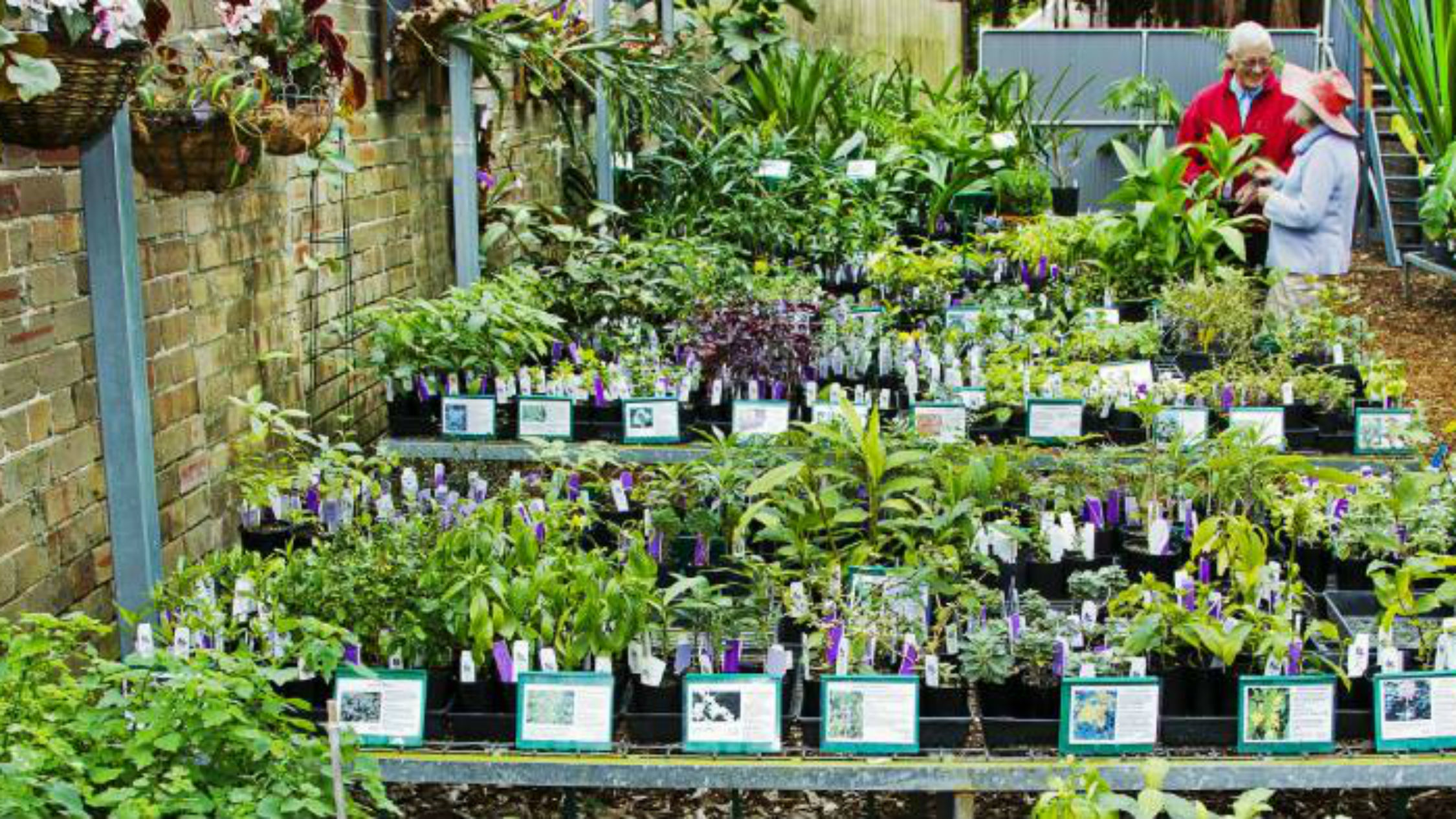 Buy Plants Sydney Sydney 39s Best Plant Nurseries