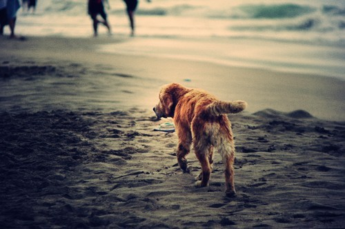 beach life animals dogs lovesurf