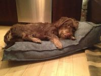 snaggle-how-tooth - DIY $5 Dog Bed: stuffed with an old ...