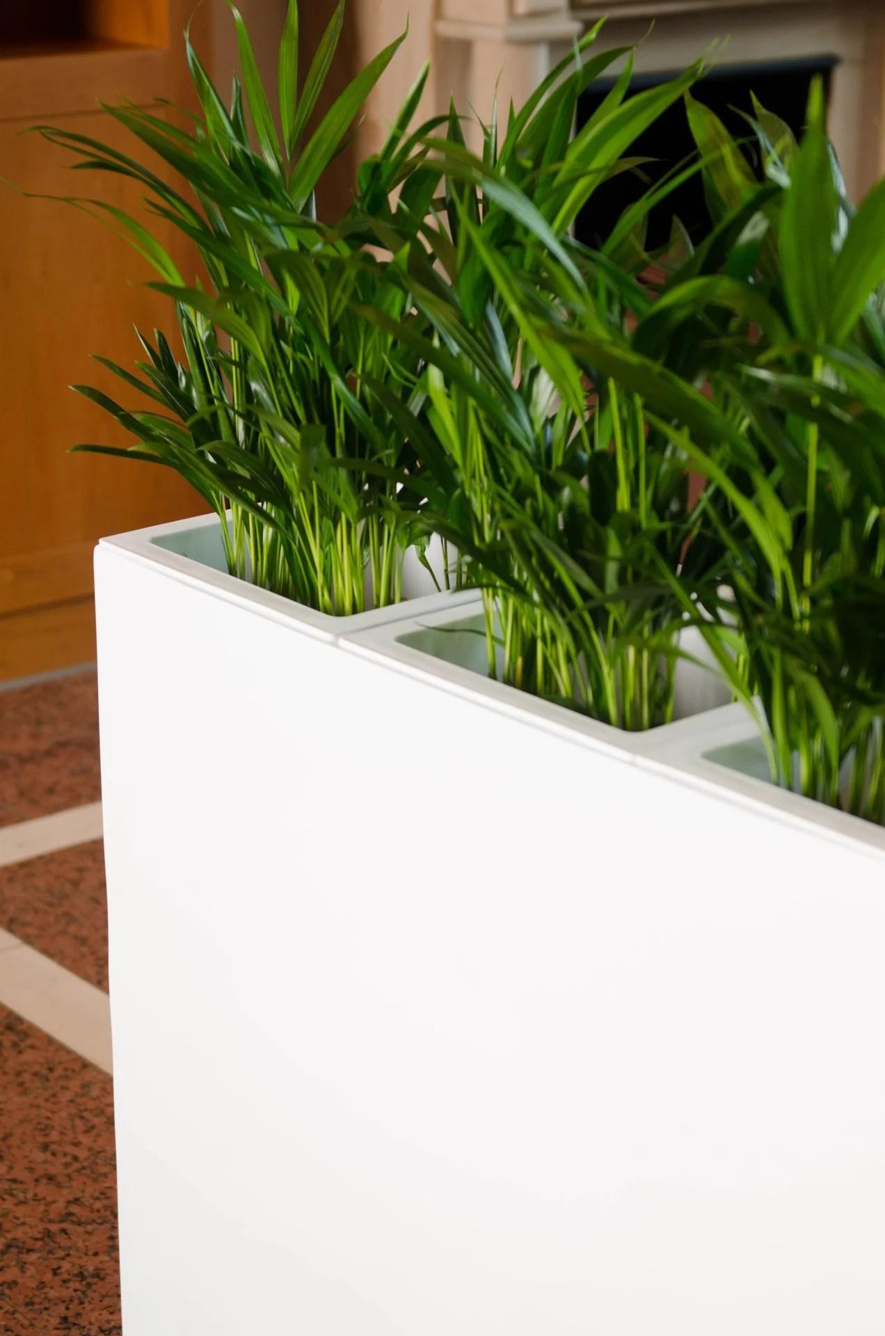Blumenkübel Raumteiler | Innenraumgestaltung: Bepflanzte Raumteiler ...