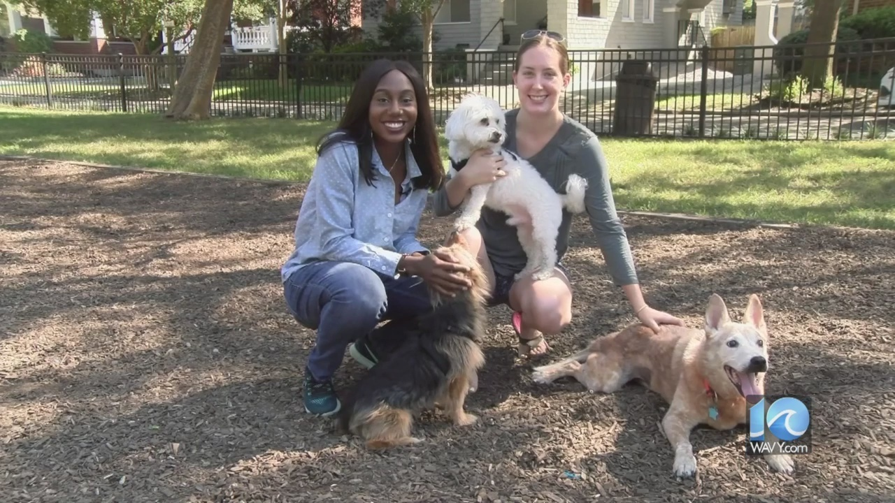 Discovering Hampton Roads In 60 Seconds Ghent Dog Park