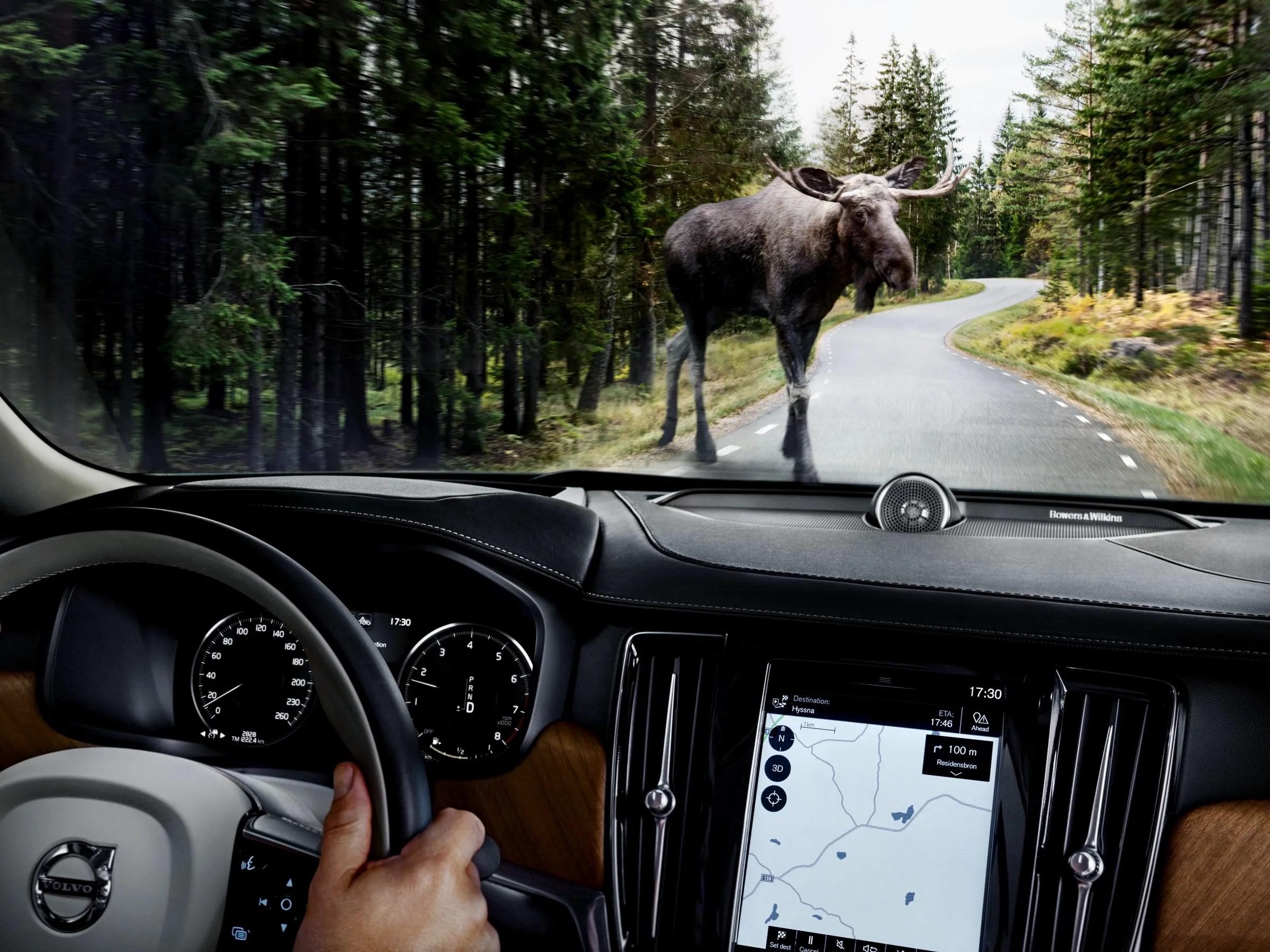 Volvo39s Large Animal Detection System Spots Moose Deer