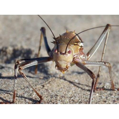 Medium Crop Of What Do Crickets Eat