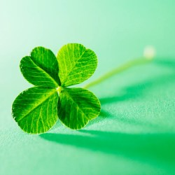 The Mysterious Genetics of the Four Leaf Clover Wired