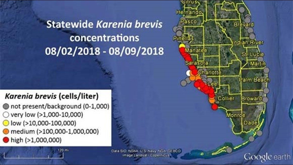 Low concentrations of red tide reach Pinellas County wtsp