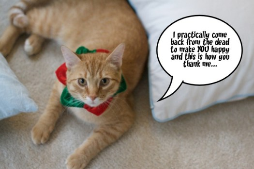 Cats in Christmas Hats