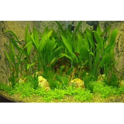 45434 HansBarth Eckaquarium 1 Aquarium   Aquariumplanten 