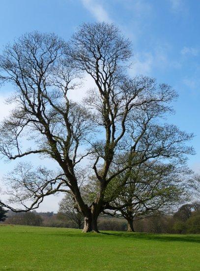 Knole Park, Sevenoaks, Kent, UK