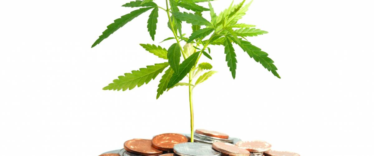 High Income The Ways You Can Make Money Off Legal Marijuana