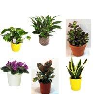 Best Plants For the Office | POPSUGAR Smart Living