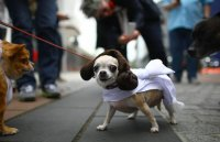 Creative Dog Costumes | POPSUGAR Tech