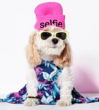 American Eagle Dog Clothes Line | POPSUGAR Fashion