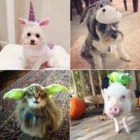 DIY Pet Costume Ideas | POPSUGAR Australia Smart Living