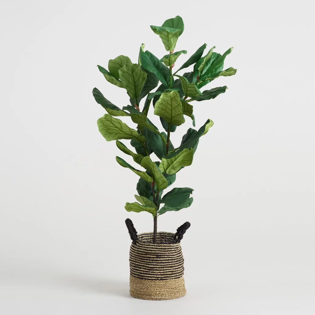 Fiddle Leaf Fig Tree The Best Faux Fiddle Leaf Fig Tree Popsugar Home