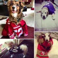 Dogs Wearing Football Jerseys | Pictures | POPSUGAR Pets