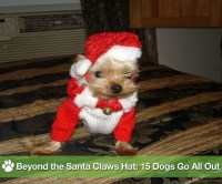 Pictures of Dogs in Christmas Costumes | POPSUGAR Pets